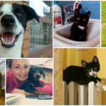 NAJNOVIJA ISTRAŽIVANJA: Ulični psi su najinteligentniji!