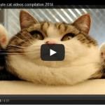 NAUČNICI DOKAZALI: Video snimci mačaka čine nas srećnim i povećavaju nam energiju!