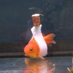 SVAKI ŽIVOT PODJEDNAKO BITAN: Smislio izum i spasio život svojoj zlatnoj ribici! (VIDEO)