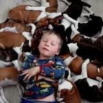 FENOMENALNO: život sa 16 štenaca u kući (VIDEO)