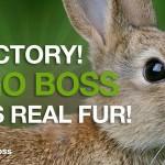 """BRAVO: """"Hugo Boss"""" prestaje da koristi i prodaje životinjsko krzno!"""