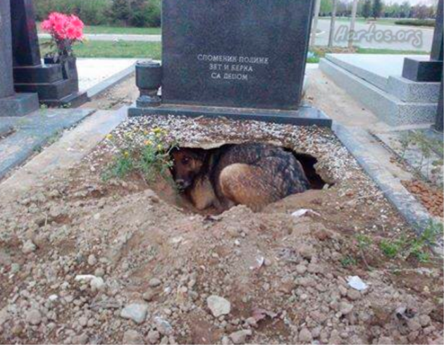 Pas leži u pukotini na grobu petface