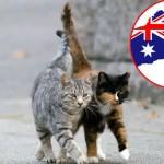 ZAŠTO: Australija ubija 2 miliona mačaka!