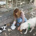 """Dragana je pokušala da nahrani uličnog psa u Novom Sadu, a policija je zaustavila: """"Ne smeš da hraniš džukele""""!"""