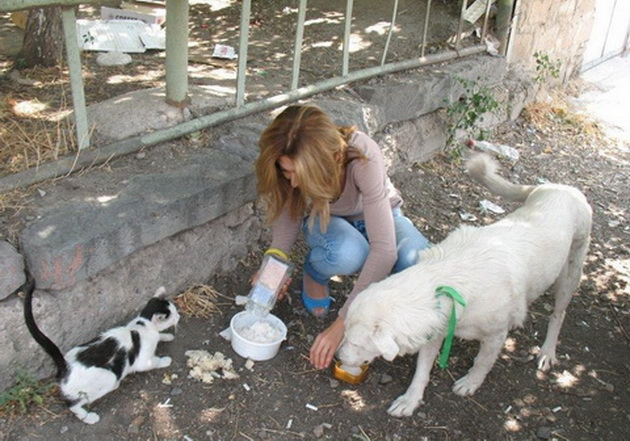 nahrani uličnog psa petface