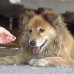 SRAMOTA U NOVOM SADU: Ukoliko nahranite psa ili mačku na ulici, dobićete KAZNU!