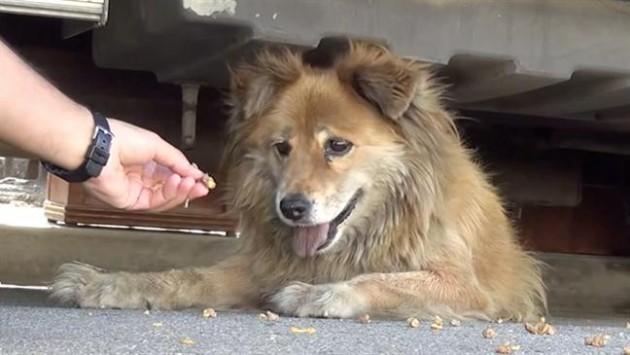 nahranite psa ili mačku na ulici petface