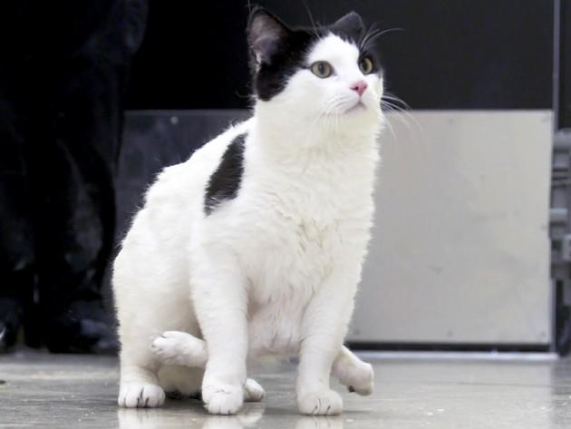 mačka koja ima 6 nogu petface