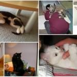 Ove mace su dokazale humanost jer pomažu napuštenima!