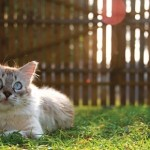 OPREZ: I mačke mogu dobiti toplotni udar!