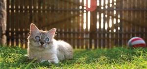 mačke mogu dobiti toplotni udar petface