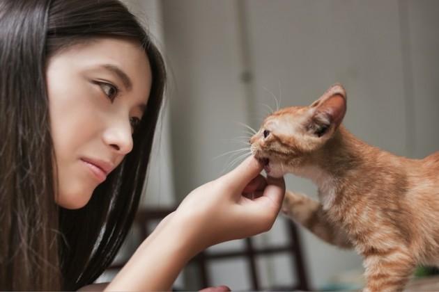 Koliko poznaješ svoju mačku petface