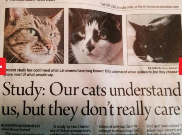 Mačke nas razumeju petface