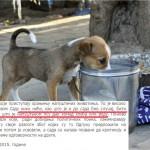"""VLAST U NOVOM SADU: """"Ovo je hajka protiv nas. Nema kazni za one koji psima daju komad hleba ili vodu""""!"""