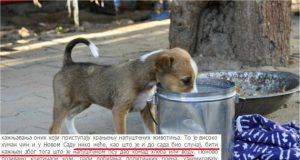 Nema kazni za hranjenje pasa petface