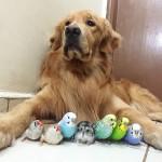 Pas, osam papagaja i hrčak petface2