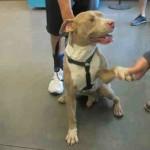 PRIČA KOJA ĆE VAS SLEDITI: Pas se rukuje sa vlasnikom, koji ga upravo ostavlja u Prihvatilištu – ZAUVEK!