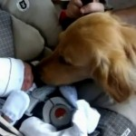 POLA MILIONA PREGLEDA: Prvi susret bebe i psa rastopiće vam srca! (VIDEO)