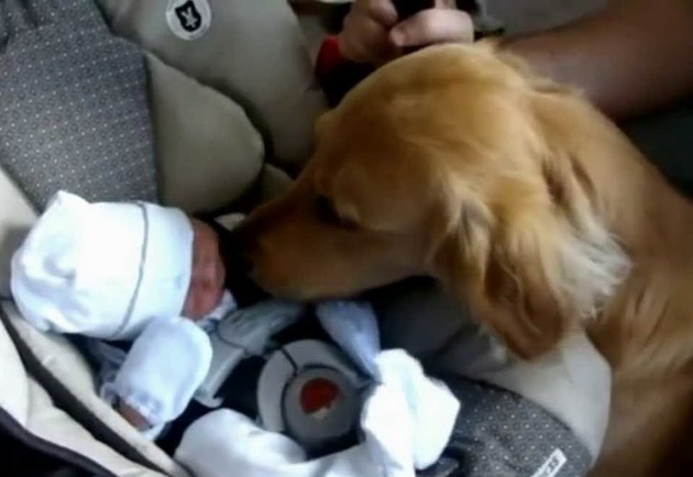 Prvi susret bebe i psa petface