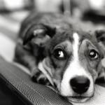 Pomozite mu: Strah od grmljavine jedan od 10 najčešćih kod pasa!