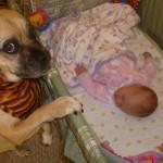 Beba i pas: 20 fotografija pasa koji ne mogu da obuzdaju ljubav prema bebama!
