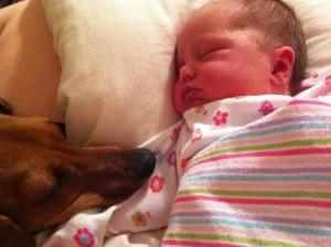beba i pas petface12