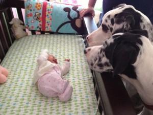 beba i pas petface14