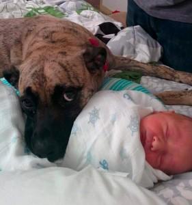 beba i pas petface15