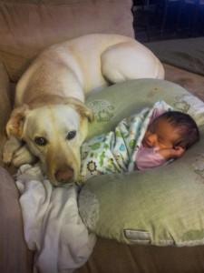 beba i pas petface16