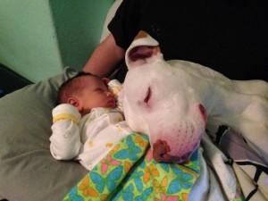 beba i pas petface17