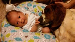 beba i pas petface19