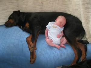 beba i pas petface2