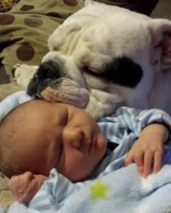 beba i pas petface20