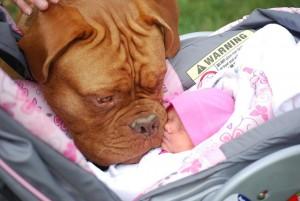 beba i pas petface3