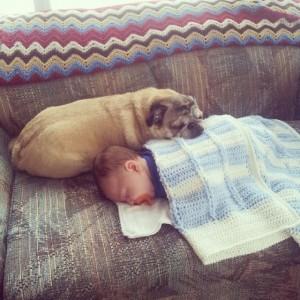 beba i pas petface4