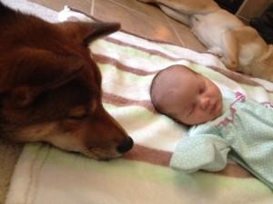 beba i pas petface6