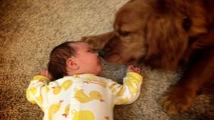 beba i pas petface8