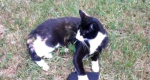 hrabra mačka petface