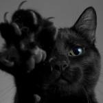 NOVOSTI: krzno mačke otkriva njen karakter!