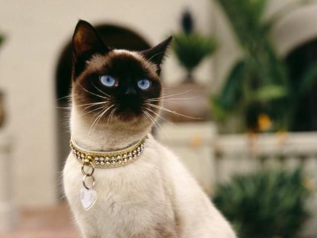 krzno mačke otkriva njen karakter petface