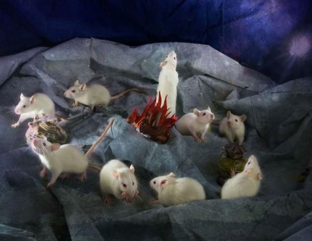 laboratorijske životinje petface