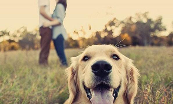 ljubimci poboljšavaju društvene odnose petface