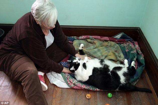 mačka teška neverovatnih 14.5 kilograma petface