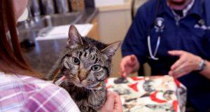 mačka koja je preživela petface
