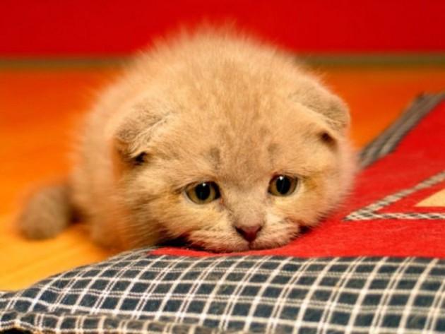 mace mogu biti neraspoložene petface