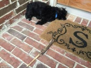 na smrt pretukao psa petface