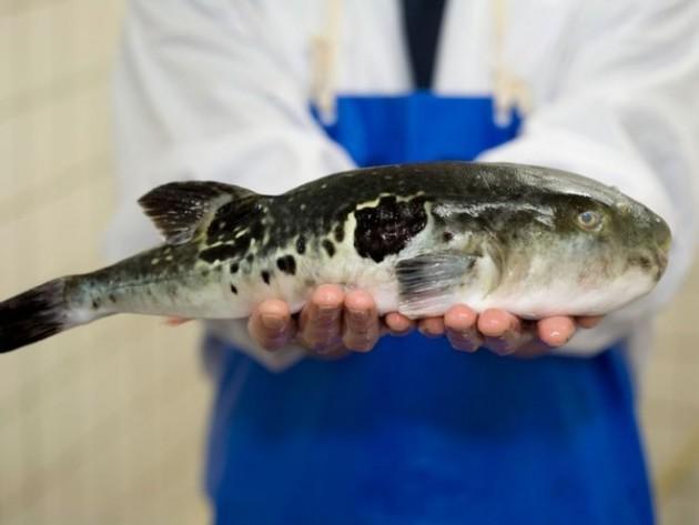 najotrovnija riba na svetu petface