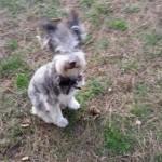 """PRIČA UZ KOJU ĆETE PLAKATI: """"Milenko je bio napušten pas. Više ga nema. Otrovan je""""!"""