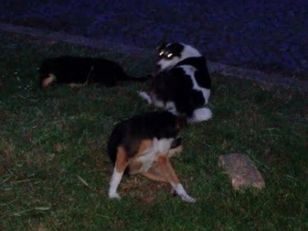 otrovani psi petface