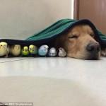 pas i drugari petface1